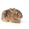 Rabbit by Scott Sanders