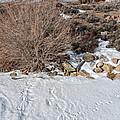 Rabbit Tracks by Kathleen Bishop