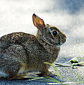 Rabbit by Yulia Kazansky