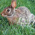 Rabbit On The Run by John Telfer