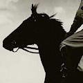 Race Horse Gallant Fox by Edward Steichen
