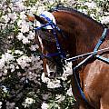 Racing Horse  by Focus  Fotos