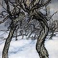 Rackham: Whisper Trees by Granger