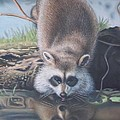 Racoon Reflections by Michael Briere