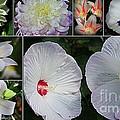 Radiant In White by Dora Sofia Caputo Photographic Design and Fine Art
