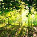 Radiant Sunlight Through The Trees by Lars Lentz