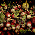 Flemish Radish Art by Jennifer Wright