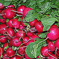 Radishes by GK Hebert Photography