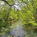 Rafting The Springs by Deborah Good