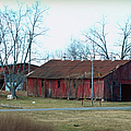 Ragged Red Shed I by Paulette B Wright