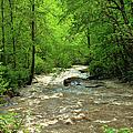 Raging Waters - West Virginia Backroad by Paulette B Wright