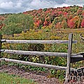 Rail Fence In Autumn by Christian Mattison