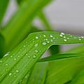 Rain Beads IIi by Bill Owen