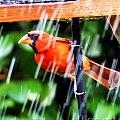 Rain Bird by Lizi Beard-Ward
