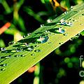 Rain Blade by Beth Ferris Sale