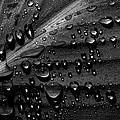 Rain by Bob Orsillo