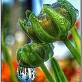 Rain Drop On Flower by Lucas Lee