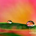 Rain Drops by Kaye Menner