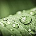 Rain Drops On Green Leaf by Elena Elisseeva
