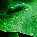 Rain Drops by Rod Wiens