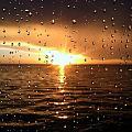 Rain Drops by Tammie Jones