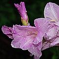 Rain Flower 1 Lavender by Andee Design