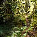 Rain Forest 2 by Randy Giesbrecht