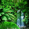 Rain Forest And Waterfall by Elaine Plesser