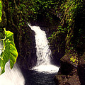 Rain Forest Grotto With 2 Waterfalls by Michael Kogan