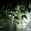 Rain Forest Overhang by Jared Best