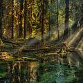 Rain Forest Sunbeams by Mary Jo Allen