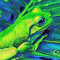 Rain Forest Tree Frog by Jane Schnetlage