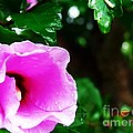 Rain Kissed Flower by Jannice Walker