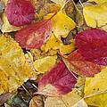 Rain Leaves by Guido Montanes Castillo