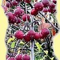 Rain On The Crab Apples by Will Borden