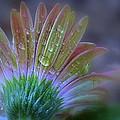 Rain Petals by Michelle Ayn Potter