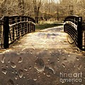Rain Rain Go Away by Nikki Vig