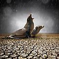 Rain Relief by Carlos Caetano