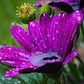 Rain Shower by Lucinda Walter