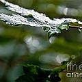 Rain Sparkles by Cheryl Baxter
