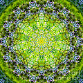 Lluvia Mandala by Susan Bloom