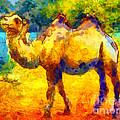 Rainbow Camel by Pixel Chimp