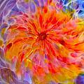 Rainbow Coronal by Tim G Ross
