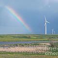 Rainbow Delight by Angela Pelfrey