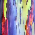 Rainbow Eucalyptus 2 by Dawn Eshelman
