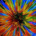 Rainbow Exuberance by Tim G Ross
