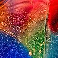 Rainbow Fishtail by Omaste Witkowski
