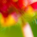 Rainbow Flower by Darryl Dalton