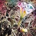 Rainbow Flower  by Kathleen Messmer