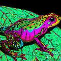 Rainbow Frog 3 by Nick Gustafson